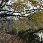 Monte Cido (O Caurel)