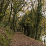 Paseo das Aceas (Sarria)
