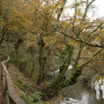Pasarela río Sarria