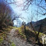Camino hacia Vilarín de Abaixo