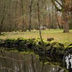 Canal río Miño