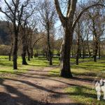 Parque-Jardín Botánico y la Carballeira de Caldas de Reis