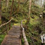 Puente hacia Pardiñas