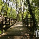 Puente Área Recreativa de Lodeiro