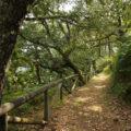 Ruta de Oubachu (Muniellos)