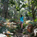 Bosque hacia Cala Burbujas