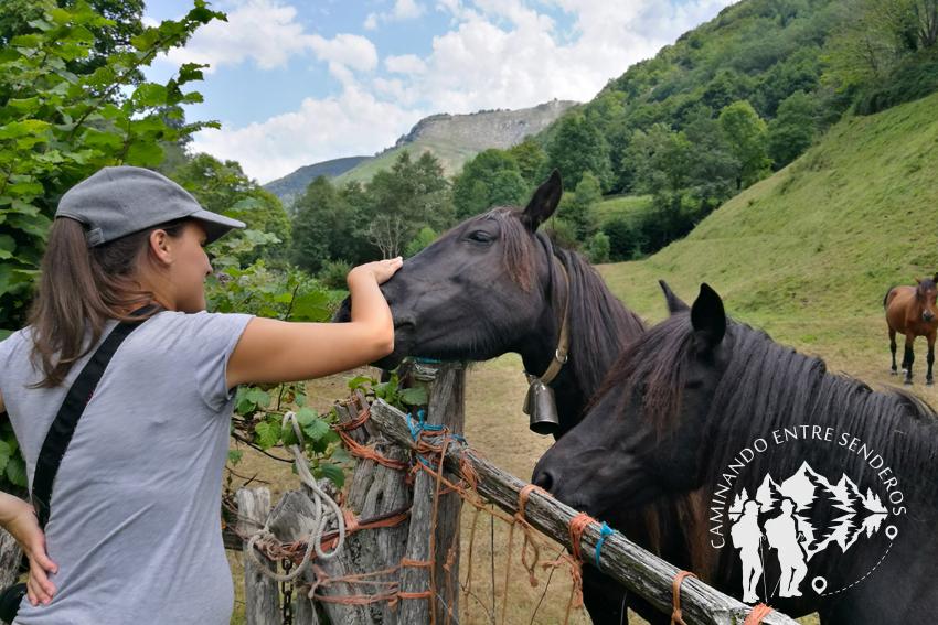 Establo de caballos