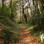 Bosque autóctono Serantes