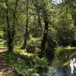 Paseo fluvial Río Sarela (Santiago)