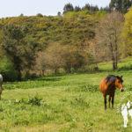 Caballos de camino al muiño de Escribano