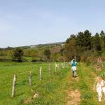Camino hacia Fervenza da Grifa (Lalín)