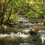 Río das Gándaras