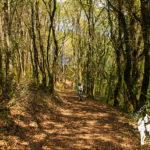 Bosque das Gándaras