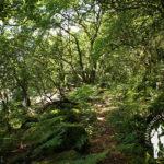 Devesa de Anllares río Xallas (Vimianzo)