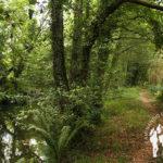 Senda fluvial río Coroño