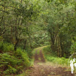 Ruta da Lamprea (Brión)