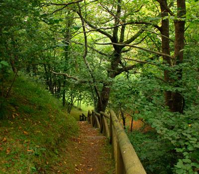 Área recreativa Mestas (Asturias)