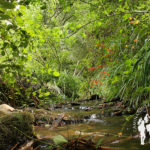 Ruta río Eifonso PR-G5 (Bembrive)