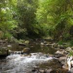 Río Ponga