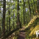 Valle de La Candanosa