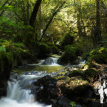 Río Pontillón