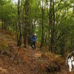 Bosque da Fervenza (O Corgo)