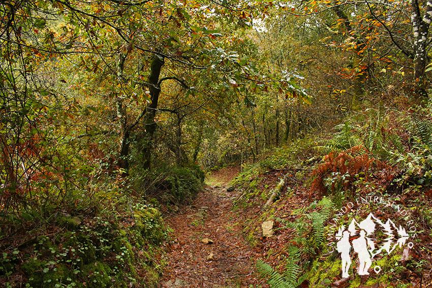 Bosque autóctono Furelos