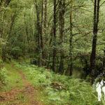 Fraga del río Sor