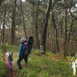 Bosque de Canide