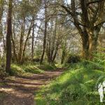 Bosque Abelleiras