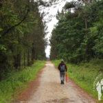Pista forestal Cacheiras