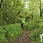 Bosque de ribera río Tella