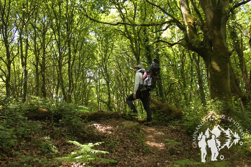 Bosques mágicos de Saamasas (Lugo)