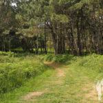 Bosque Punta Torrella (Dexo)