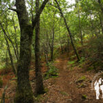 Bosque autóctono Angueira de Castro