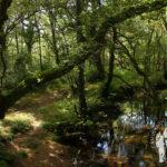 Río Baio