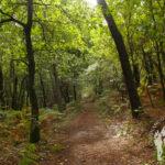 Ruta rego dos Roxos (Villestro)